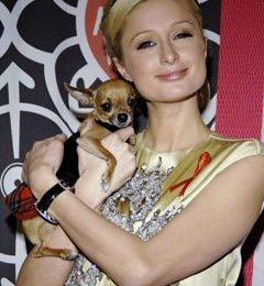 """Paris Hilton in """"I'm a Celebrity (Get Me Out of Here!)"""""""
