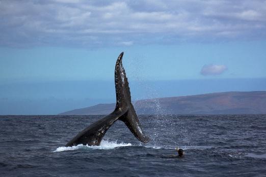 i giganti dell'oceano