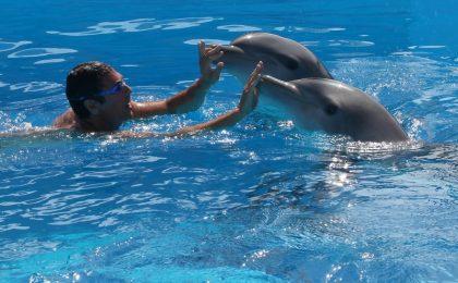 Ascolti TV mercoledì 5 giugno 2013: Come un delfino 2 chiude a quasi 5 milioni