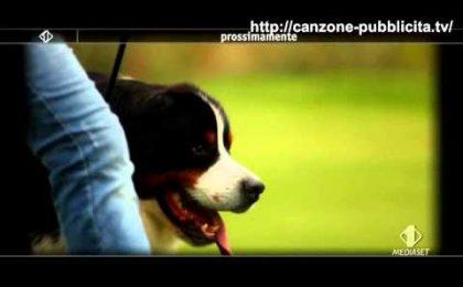 Buddy, Rossella Brescia su Italia 1 con uno speciale dedicato ai cani
