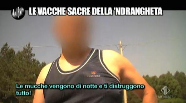 Vacche Sacre ndrangheta