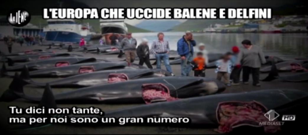 Mauro Casciari, L'Europa che uccide balene e delfini