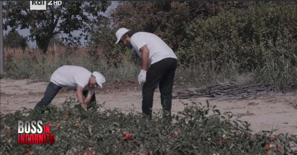 piergiorgio e ilario, lavoro nei campi